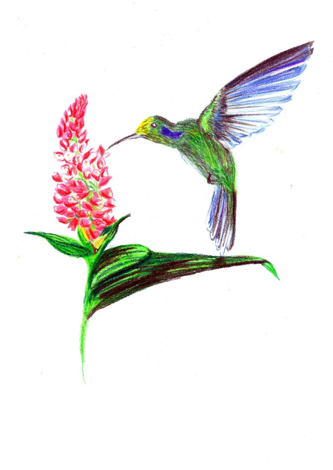 hummingbird_by_aquaticwarbler-dabfija